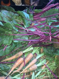 carrots and rhubarb fresh from the garden