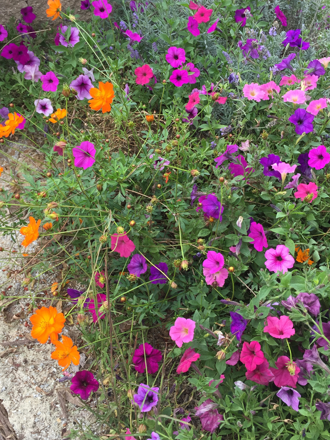 pink, purple and orange flowers